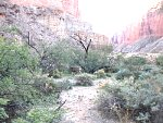 Muley in Grand Canyon
